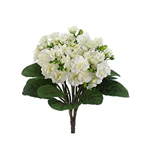 "12"" African Violet Bush White (pack of 12) 78"