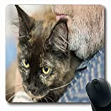 Pandarllin Mousepads Siamese Bearded Holding Gray Tabby Cat Wildlife Adorable Funny Oblong Shape 7.9 x 9.5 Inches Oblong Gaming Mouse Pad Non-Slip Rubber Mat