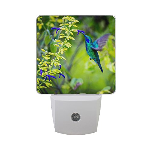 Floral Night Light - Naanle Set of 2 Beautiful Green Violet Ear Hummingbird Feeding Floral Flower On Fuzzy Green Woodland Auto Sensor LED Dusk to Dawn Night Light Plug in Indoor for Adults