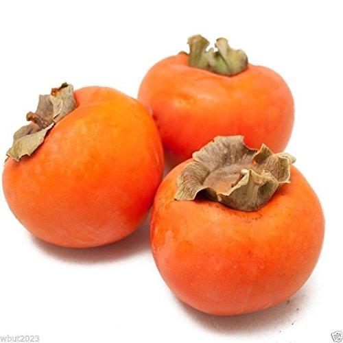 Japanese Persimmon,(25 Seed ) Asian Persimmons(Diospyros kaki-Fuyu) Tree Shrub from Diospyros kaki