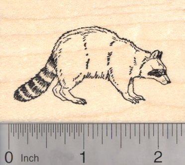 Raccoon Rubber Stamp, Racoon, Wildlife