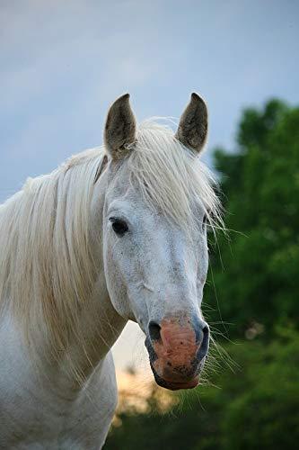 - Framed Art for Your Wall Horse Mold Thoroughbred Arabian Horse Head Stallion Vivid Imagery 10 x 13 Frame