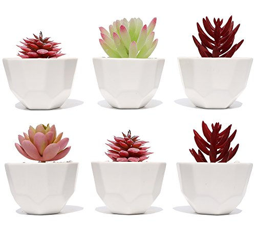 Asriver Succulent Planter Pot - 3.2 Inch - Set of 6 - Small White Modern Decorative Ceramic Flower Plant Pot with Drainage - Home Office Desk Garden Mini Cactus Pot Indoor Decoration by Asriver