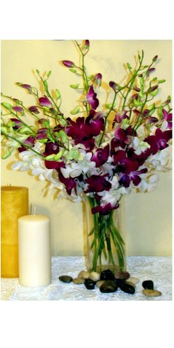 Fresh Flowers 20 Dendrobium Orchids Special Mix with Vase by Orchid House