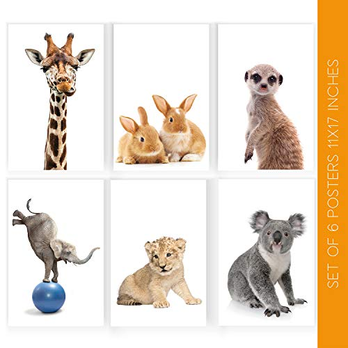 (Animal Nursery Decor | Set of Six Beautiful 11X17 Cute Animals Wall Art Posters | These Gorgeous Decorative Prints Come with Sticky Squares for Easy Installation | Cute Wall Decor)