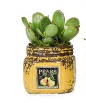 Mini Jar of Life (Pear - Terracotta)