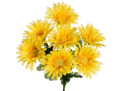 gerbera daisy bush - 3