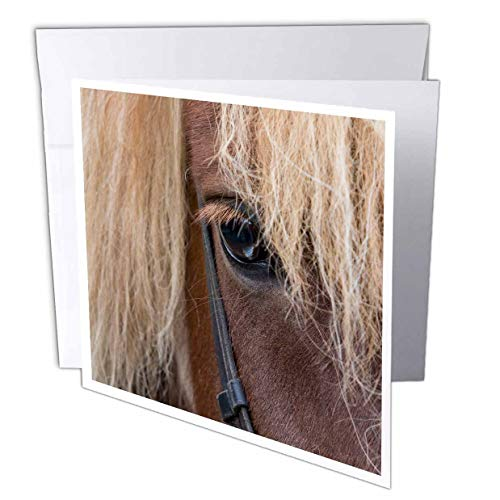 - 3dRose Danita Delimont - Horses - Detail of Sorrel Horse with Flax Mane. - 1 Greeting Card with Envelope (gc_313644_5)