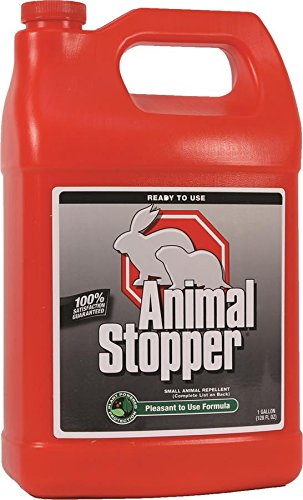Rabbit Stopper (Messina Animal Stopper Ready to Use Refill, 1 gallon)