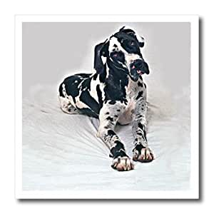 Dogs Great Dane - Great Dane - 10x10 Iron on Heat Transfer for White Material (ht_248_3)