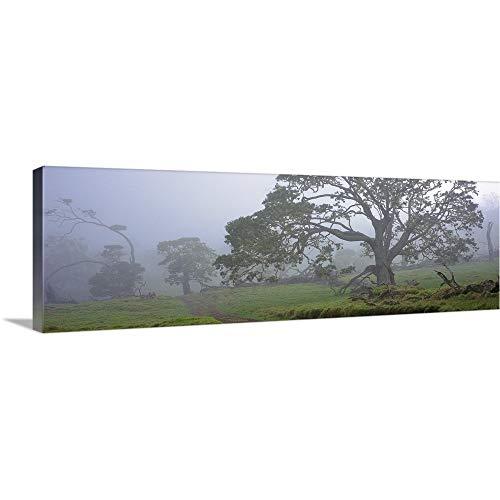 GREATBIGCANVAS Gallery-Wrapped Canvas Entitled Koa Trees on a Landscape, Mauna Kea, Mana Road, Big Island, Hawaii by 48