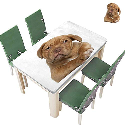 Printed Fabric Tablecloth Dogue de Bordeaux Puppy,Weeks Old,Lying in Front of White Background Washable Polyester 54 x 102 Inch (Elastic Edge) ()
