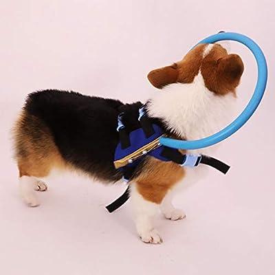 Bulz Arnés Ciego para Perros, protección contra colisiones ...
