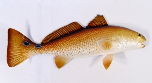 Replica Red Drum Fish Ocean Restaurant Wall Decor - Fish Mount