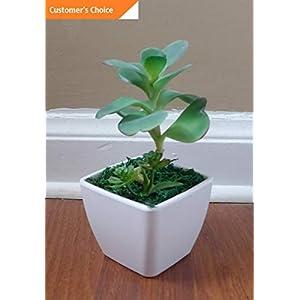 Hebel New Artificial Flowers Bush Unkillable Succulent with Pot Home Table Decor   Model ARTFCL - 543   96