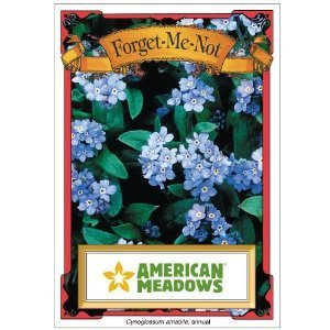 Forget Me Not Seed Packets - 8