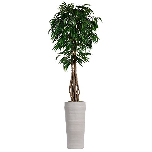 Laura Ashley VHX109218 Willow Ficus with Multiple Trunks Planter, 99