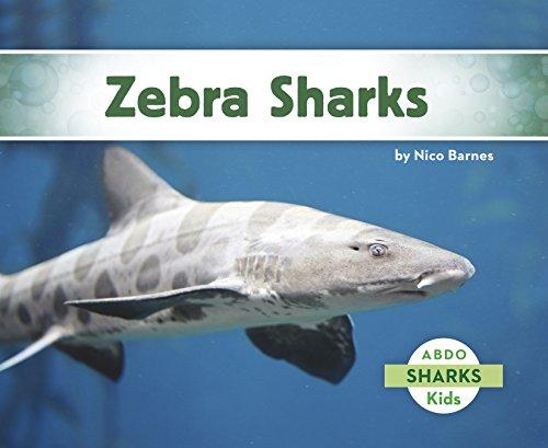 zebra shark - 9