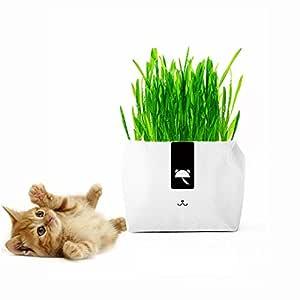 KOBWA Kit de Cultivo de Hierba de Trigo Pequeña Sin Jabón para Gatos, Súper Fácil de Cultivar, con Maceta de Papel Creativo, Control de Pelota Natural ...
