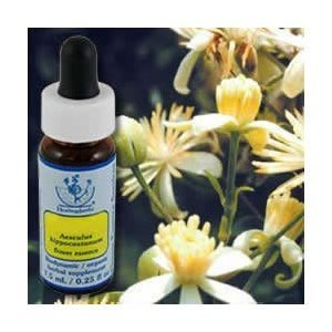 Dropper Clematis (Clematis Dropper, 0.25 oz by Flower Essence Services (Pack of 2))