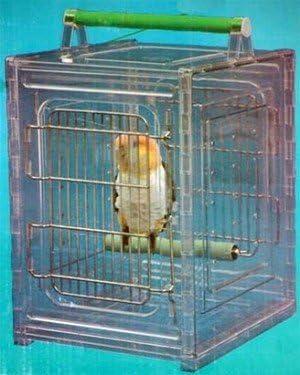 Paradise Toys Bird Carrier 10 x 12 x 15 PT50002a