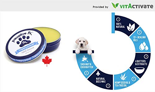 Amazon.com: No1 - Aceite de cáñamo para perro (lata de 2 oz ...