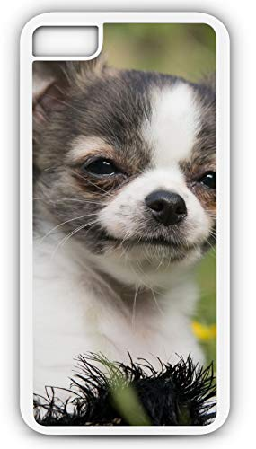 iPhone 7 Plus 7+ Case Chihuahua Mexico Small Breed Dog Puppy Canine Customizable by TYD Designs in White Plastic Black Rubber Tough Case