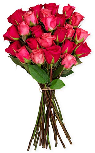 3 Red Birthday Roses - Benchmark Bouquets 2 Dozen Blushing Beauty Roses, No Vase (Fresh Cut Flowers)