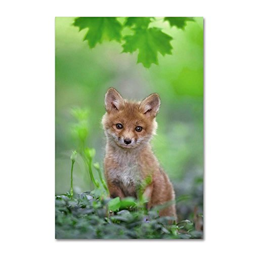 Red Fox Pup by Nick Kalathas, 12x19-Inch Canvas Wall Art