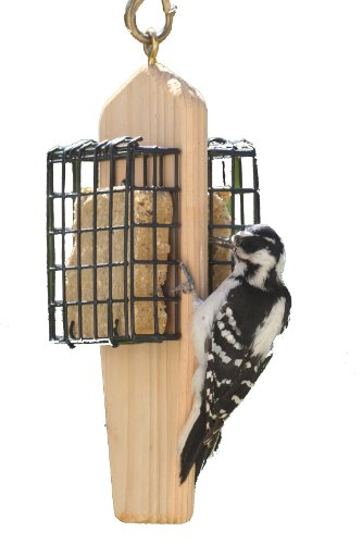 Suet Bird Feeder - Birds Choice 2-Cake Hanging Suet Feeder