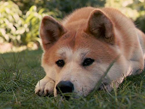 Wall Art Prints - Akita Inu Dog hachiko sad Down Grass for sale  Delivered anywhere in Canada