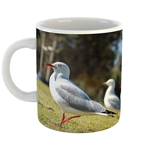 Trio Sea Gull (Westlake Art - Seagulls Bird - 11oz Coffee Cup Mug - Modern Picture Photography Artwork Home Office Birthday Gift - 11 Ounce (EC2C-48463))
