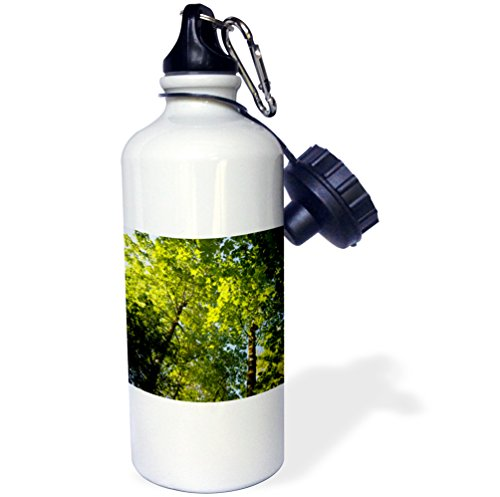 Danita Delimont - Canada - Canada, British Columbia, Wallace Island. Backlit maple tree - 21 oz Sports Water Bottle - Canada Wallace
