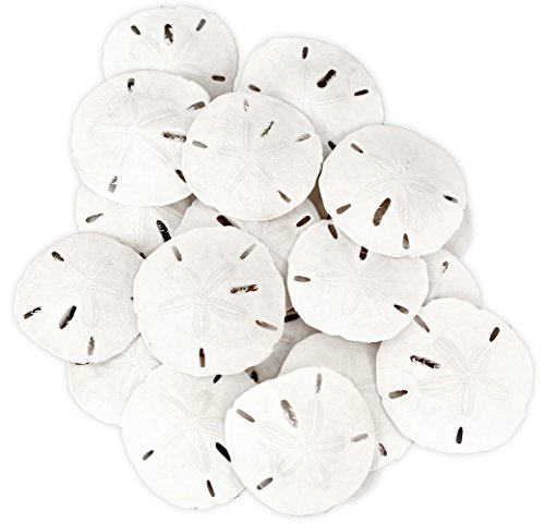 Butterfly Bubble Necklace (White Sand Dollars - 20 All-Natural Sand Dollar Shells (2-3 Inch) - Sand Dollars For Home Decor, Holidays, Events, Gifts, and Crafting - White Sand Dollar Beach)