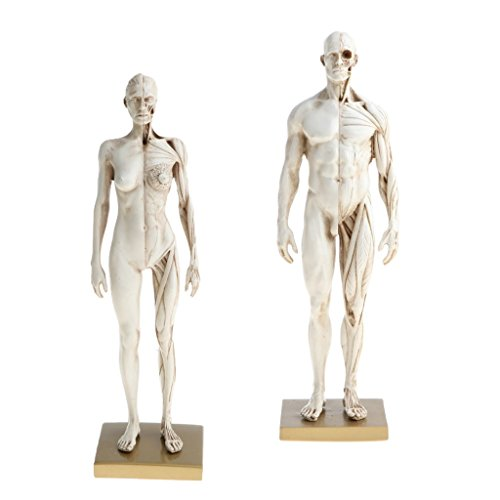 Baosity 男性と女性 解剖学モデル 30cm 全身モデル 医学研究キット ホワイト