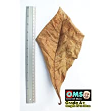 SunGrow Catappa Ketapang Indian Almond Leaf for Fish Tank 10 leaves