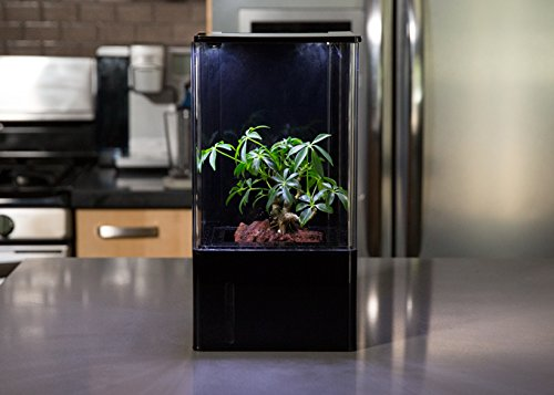 EcoQube Air - Decorative Hydroponics Indoor Herb Home Garden Kit with LED Grow Light, Basil Seeds and True Hepa-Type Filter Air Purifier by EcoQube (Image #6)
