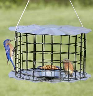 Bluebird Feeder - Includes Meal Worm Cup - Designed To Ke...