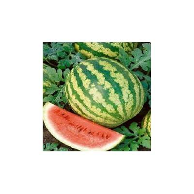 Watermelon Seeds 50 Crimson Sweet Melon 88 Days : Garden & Outdoor