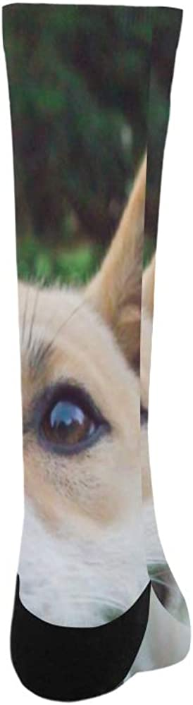 Funny Cute Adorable Dog Puppy Polyester Crazy Warm Crew Soccer Compression Knee High Dress Troser Sock For Men Women Kids And Toddler Botts Shoes Outdoor Use Machine Washable