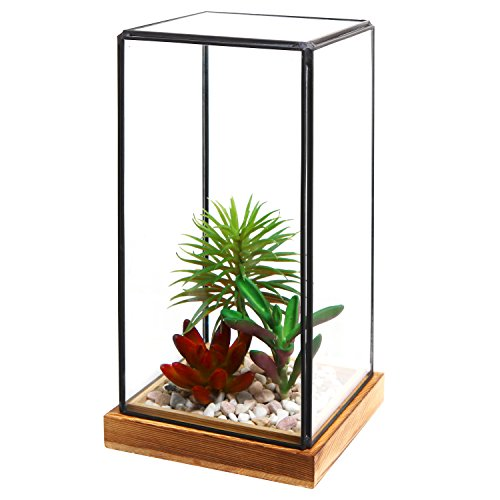 Tabletop Terrarium Display Rustic Torched