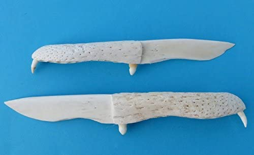 Authentic Hand Carved 7 8 Inch Alligator Jaw Bone Knife With Teeth Amazon Ca Sports Outdoors