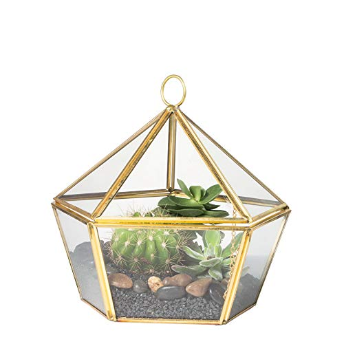 Gatton Modern Brass Copper Clear Glass Jewel-Boxed Pentagon Shape Geometric Terrarium Pot Closed Plant Moss Fern Geo Container ding Decor Box with Swing Lid Gold | Model WDDNG - 1480 | Large Gold ()