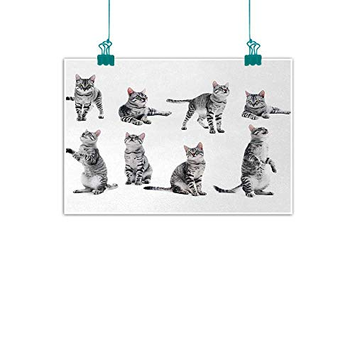 Unpremoon Cat,Wall Art Canvas Pictures Collage of a Cute Inquisitive Striped Shorthair Furry Playful Pussy Posing Art Print W 32