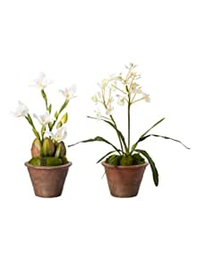 Sia Home Fashion Set de 2 Macetas Orquídeas blanco