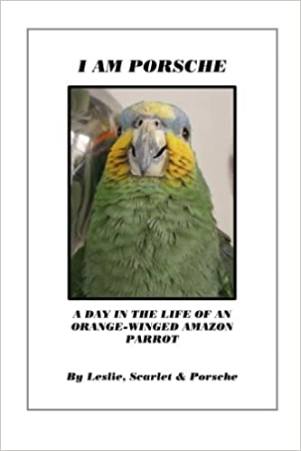 a day in the life of a bird
