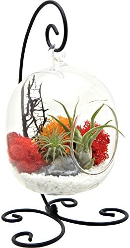 Bliss Gardens Air Plant Terrarium Kit with 6 Oval Glass with Geode Crystal – Sunburst On Ice – Small Black Metal Stand Included