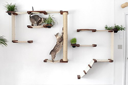 Top 10 Climbing Plants Safe For Cats Of 2019 No Place Called Home