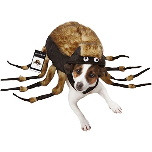 Tarantula Costumes For Dog (Zack & Zoey Fuzzy Tarantula Halloween Costume, Large)