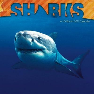 Sharks Calendar 2017 -- Deluxe Shark Wall Calendar (12x12)